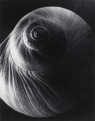 The Spiral Shell, 1921