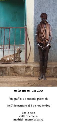 esto no es un zoo en esto sí es un bar