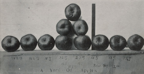 Fotógrafo desconocido: Apples grown by irrigation at Artesia, New Mexico, 1907