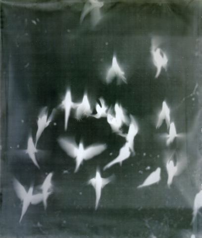 Adam Fuss - 'My Ghost' 1999 (Birds in Flight)