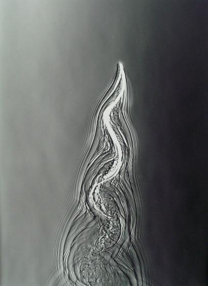 Adam Fuss - Untitled, 2007'