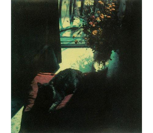San Gregorio, 1984