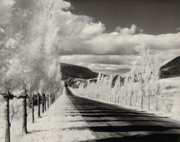 Minor White - Polar trees