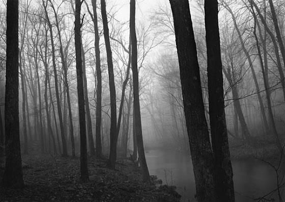 Paul Caponigro - Trees and Fog - Redding, Connecticut. 1968