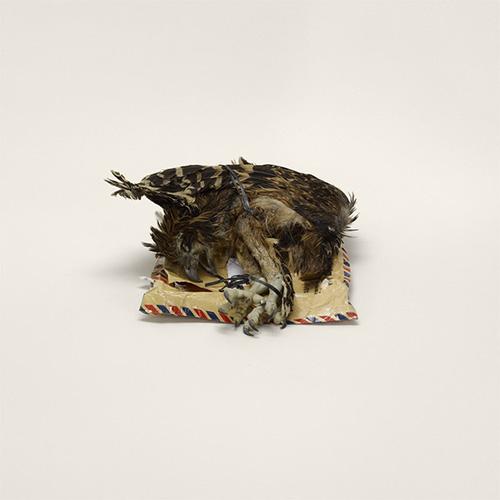 Cadáver de pájaro, etiquetado como artículo de decoración, de Indonesia a Miami (prohibido). Cadáver animal (prohibido)