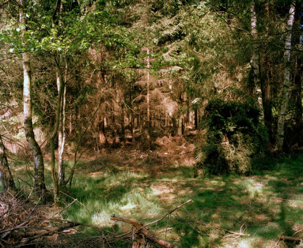 Simon Menner - Camouflage,. Sniper on the right side in the fir branch scrub.
