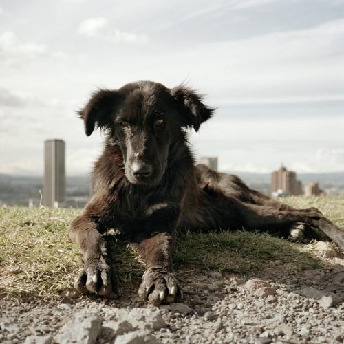 Alec Soth: Dog Days Bogotá, 2007