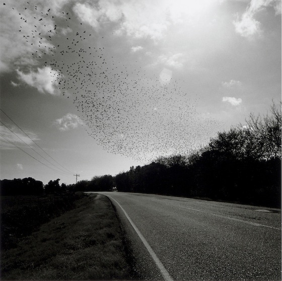 Graciela Iturbide - Pájaros