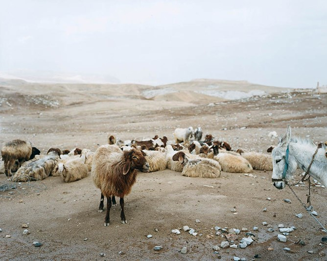 Stephen Shore - Nabi Musa, January 19, 2010, Israel / West Bank